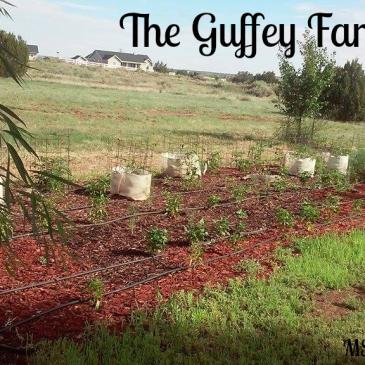 The Guffey Farm